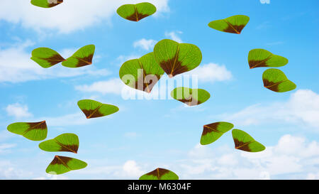 two hearts from clover leaf - Stock Photo