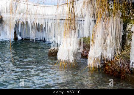 Frozen tree  ice naure lake frozen nature plants - Stock Photo