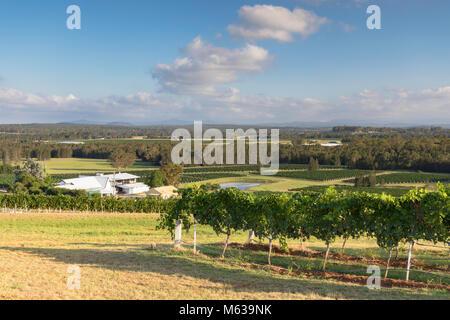 Lakes Folly Wine Estate, Hunter Valley, New South Wales, Australia - Stock Photo