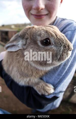 young British boy holding / cuddling rabbit in arms, close up of rabbits face looking at camera