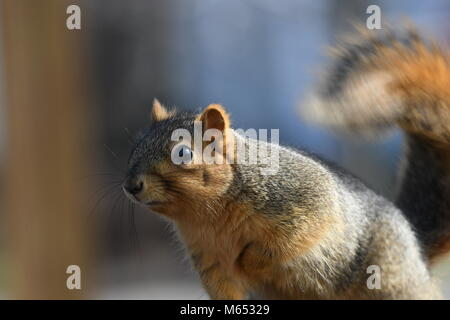 ... Squirrel hanging out in a tree outside my back door - Stock Photo & Squirrel hanging out in a tree outside my back door Stock Photo ...