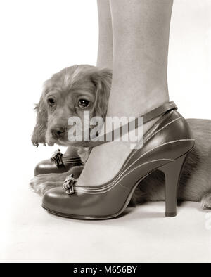 1930s 1940s SHY YOUNG PUPPY DOG LOOKING OUT FROM BETWEEN LEGS OF YOUNG WOMAN WEARING HIGH HEEL SHOES - d1491 HAR001 - Stock Photo