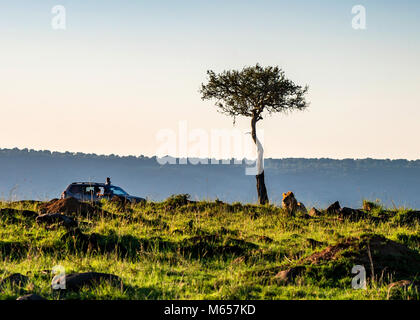 Safari view with truck and lion in Kenya - Stock Photo
