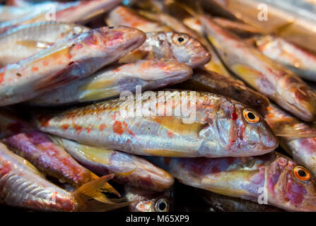 Fresh fish mullet vulgaris (red mullet) lies on the counter - Stock Photo