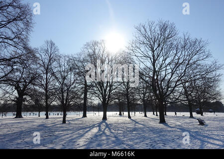 View of silhouetted trees in Kensington Gardens London casting long shadows on snow from the Beast from the East - Stock Photo