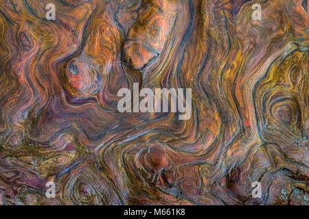 Detail of Driftwood - Washington, Fort Flagler State Park (Vertical or horizontal) - Stock Photo