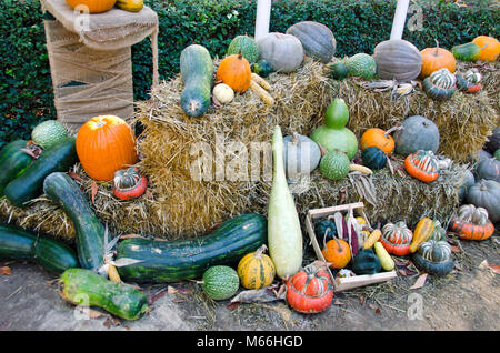 Various autumn vegetables collection on straw background in park - Stock Photo
