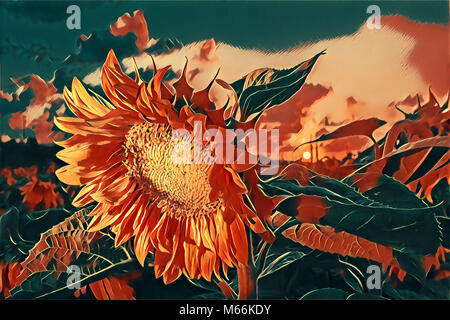 Stylized illustration of a sunflower in a field at sunset - Stock Photo
