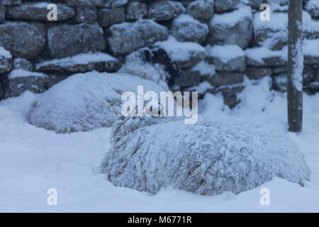 Marwood, Teesdale, County Durham, UK. Thursday 1st March 2018. UK Weather. As the severe weather continues with - Stock Photo