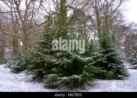 New Forest. 1st Mar, 2018. UK Weather: First day of spring in the New Forest Hampshire with snow from the beast - Stock Photo