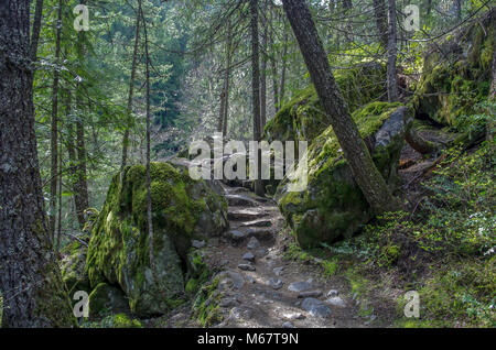 Rock lined trail through the woods in Canada