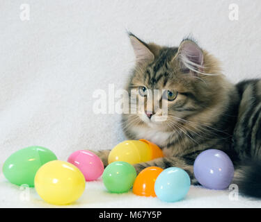 Cute brown and black tabby kitten with colorful Easter eggs on a white background. Concepts of Easter, pets, spring. - Stock Photo