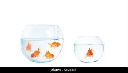 Gold fish with fishbowl isolation on the white background - Stock Photo