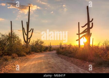 Travel to Arizona desert at sunset with Saguaro cacti in Sonoran Desert near Phoenix. - Stock Photo
