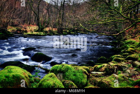 Creek in the Woods by Derwent Water, Lake District, UK. - Stock Photo