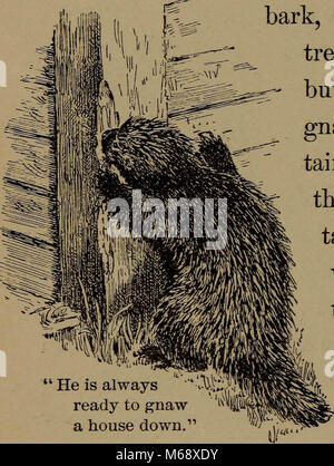 'Familiar life in field and forest; the animals, birds, frogs, and salamanders' (1898) Stock Photo