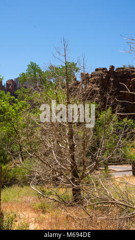 Dead tree and shrubs, weeds - Stock Photo
