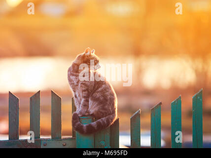 young beautiful cat sits in the village of on the fence evening during sunset - Stock Photo