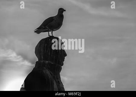 silhouette of a seagull sitting on top of a statue - Stock Photo