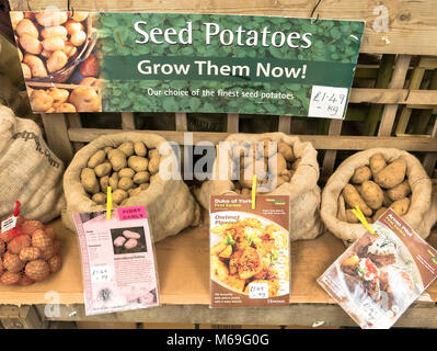 New seed potatoes displayed in an English garden centre in February - Stock Photo