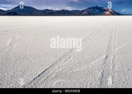Car tracks at salt pan at Bonneville Salt Flats State Park, sunset, Silver Island Mountains in dist, Great Salt - Stock Photo
