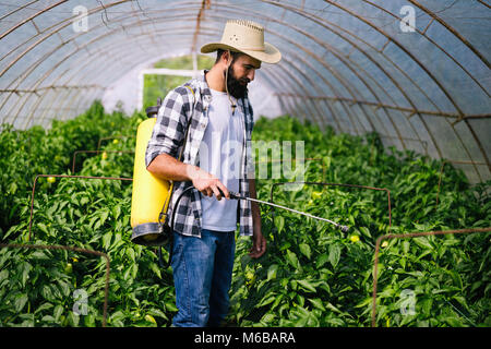 Young farmer protecting his plants with chemicals - Stock Photo