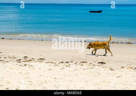 dog walking on the sand of a sunny beach. The scene is composed of a beautiful blue sea and a canoe in the background - Stock Photo