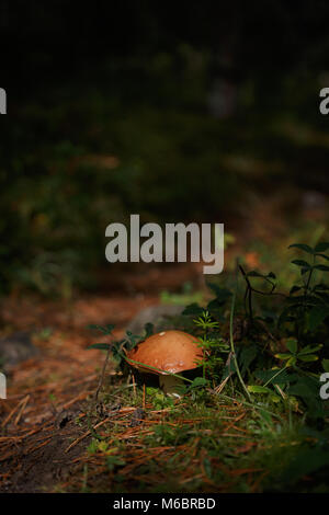 Mushroom and path in forrest - Stock Photo