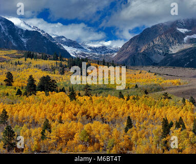 Clearing Storm, Aspens, Parker Peak, Ansel Adams Wilderness, Inyo National Forest, Eastern Sierra, California - Stock Photo