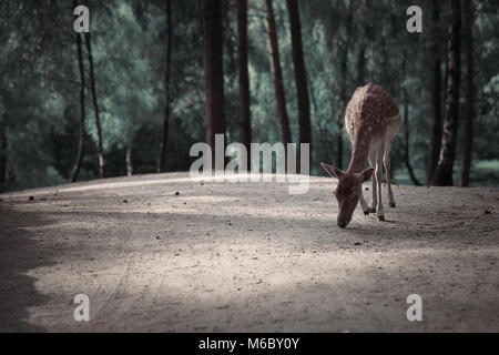 Image of lonely deer in Autumn forest landscape - Stock Photo