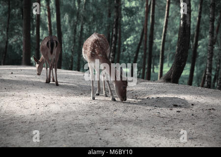 Image of lonely deers in Autumn forest landscape - Stock Photo