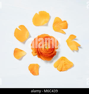 Ranunculus flower head with petals , extreme close-up - Stock Photo