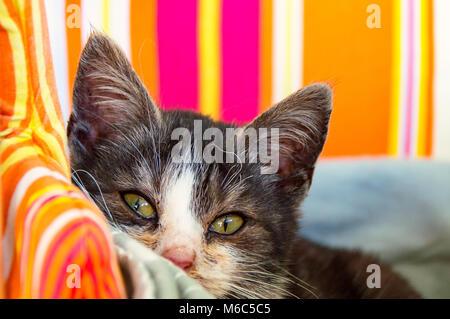 Black white Cat - Stock Photo