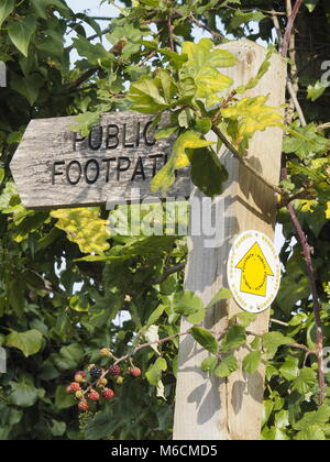 WOODEN PUBLIC FOOTPATH SIGN IN HEDGEROW WITH WILD BLACKBERRIES  AND OAK LEAVES, , NORFOLK, ENGLAND UK. - Stock Photo