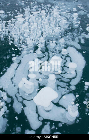 Frozen methane bubbles, Winter, Abraham Lake, Canadian Rockies, Alberta, - Stock Photo
