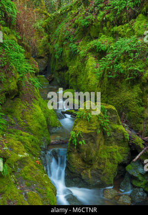 Cataract Creek, Mount Tamalpais, Marin County, California - Stock Photo