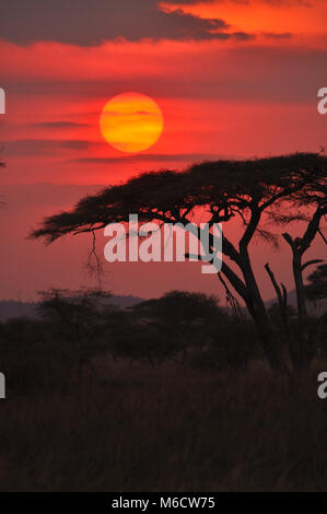 Sunset captured in the Serengeti - Stock Photo
