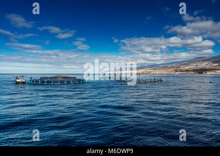 Offshore fish farms clustered around the west coast of Tenerife, Spain. Sea bass and common bream are cultured in - Stock Photo