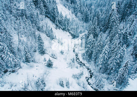Aerial view of snow covered pine forest in Switzerland. - Stock Photo