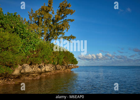 The Wave cut Rocks at the Eastern end of Le Morne Beach in Mauritius, with the Mangroves and other Tree's and shrubs - Stock Photo