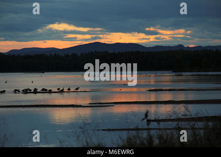 Sunset and clouds reflected in Orsa lake where a group of birds are resting. - Stock Photo
