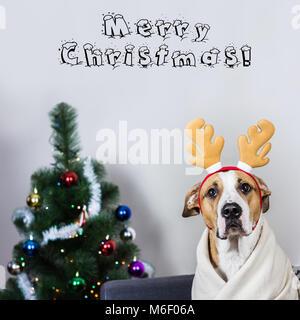 Portrait of dog in christmas reindeer headband in front of fur tree - Stock Photo