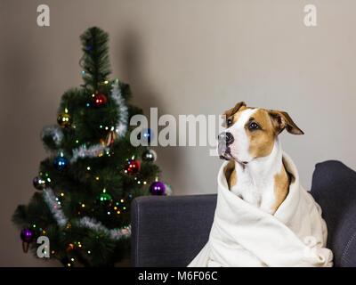 Dog on sofa and christmas fur tree - Stock Photo
