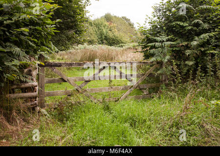 Old neglected  wooden five bar farm gate in overgrown hedge adjacent to the Offa's Dyke long distance footpath trail - Stock Photo