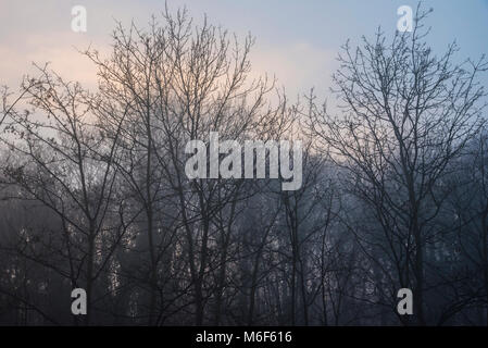 Canalside leafless trees in a winter fog setting, Kidderminster, Worcestershire, England, Europe - Stock Photo