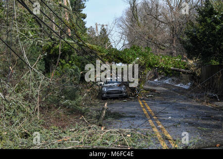 Pennysylvania, USA. 3rd March 2018. Trees fall on power lines, cars and homes after an extreme weather storm turns - Stock Photo