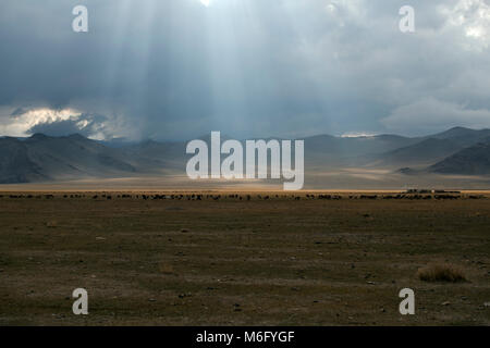 Cattle grazing in the Altai Mountains, Mongolia as rays of sunlight break through the clouds. It is the most sparsely - Stock Photo