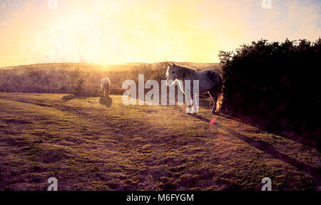 A beautiful misty sunrise landscape across the New Forest Hampshire England with two new forest ponies in the foreground. - Stock Photo
