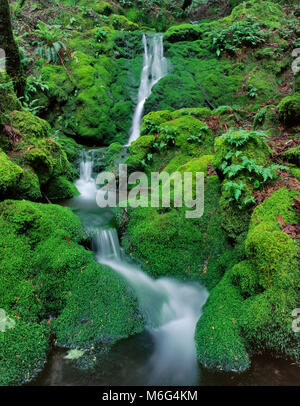 Moss Falls, Cataract Canyon, Mount Tamalpais, Marin County, California - Stock Photo