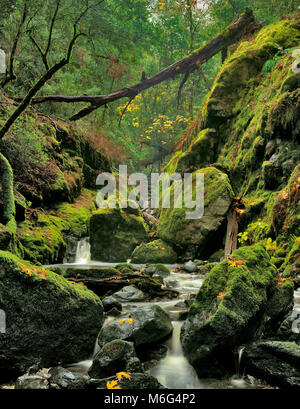 Cataract Creek, Cataract Canyon, Mount Tamalpais, Marin County, California - Stock Photo